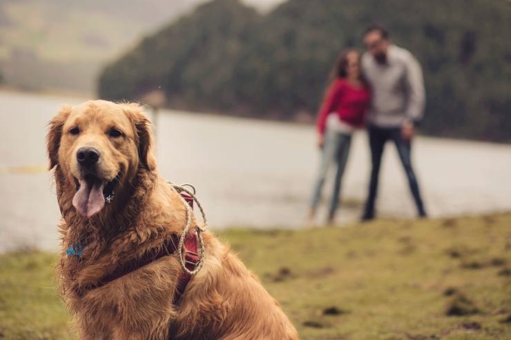 perro, mascota, boda , preboda, neusa